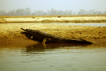 Bardia National Park Tour Package in Nepal