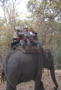 Chitwan Elephant Riding
